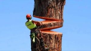 Toothwear Gum Recession Lumberjack Tree